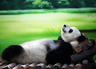 отдохнуть за 60 секунд