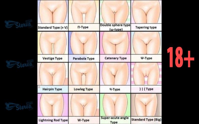 Глубина вагины