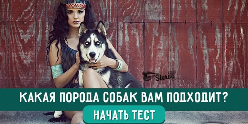 Какая порода собак вам подходит