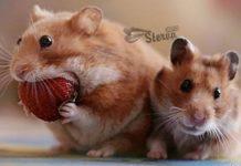 Какое вы животное в зависимости от ваших вкусовых предпочтений