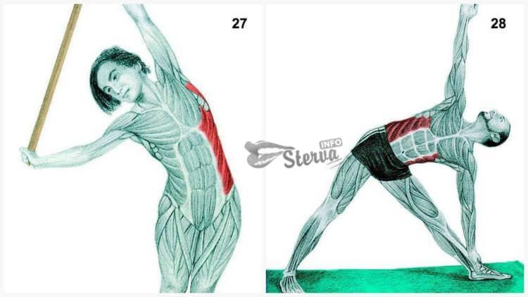 Задействованные мышцы наружные косы