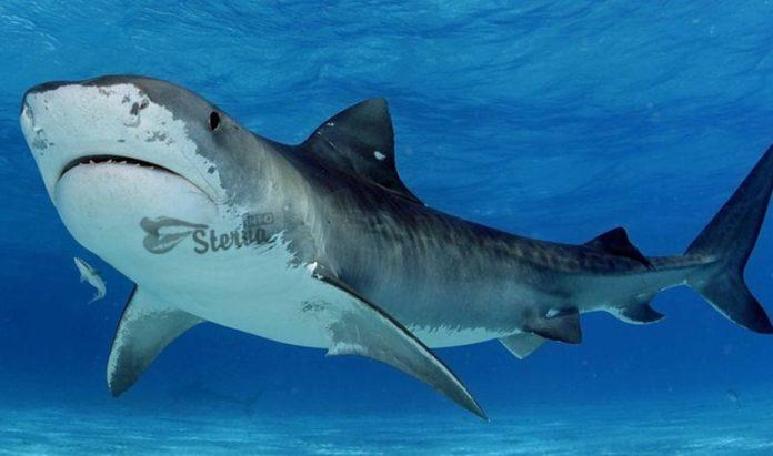 акула к чему снится по соннику миллера