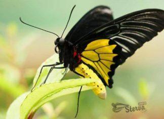 бабочка к чему снится по соннику миллера