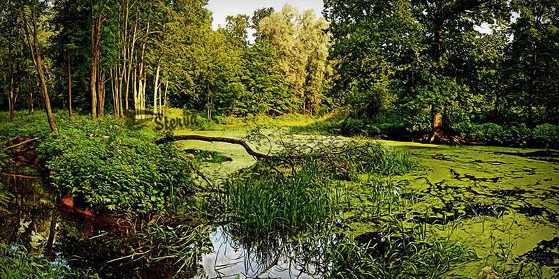 болото к чему снится по соннику миллера-