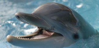дельфин к чему снится по соннику Миллера толкование снов-min