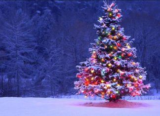 елка рождественская к чему снится по соннику Миллера толкование снов-min
