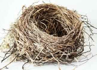 гнездо к чему снится толкование по соннику миллера-min