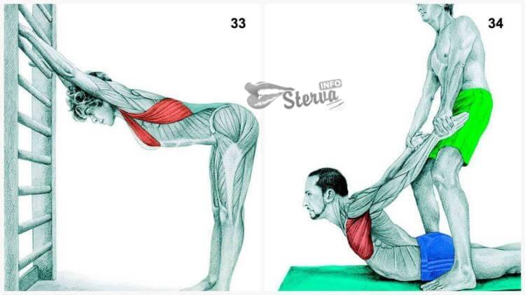 груди и широчайшая мышца спины