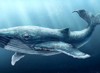 кит к чему снится по соннику Миллера толкование снов-min