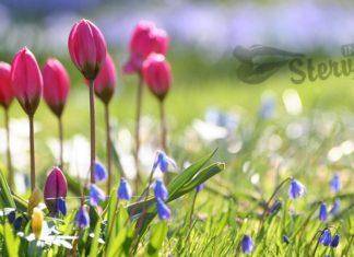 весна к чему снится по соннику миллера