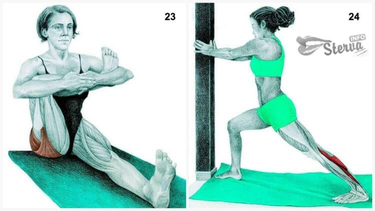 ягодичные мышци