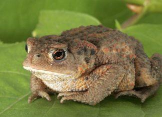 жаба к чему снится по соннику Миллера толкование снов-min