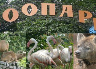 зоопарк к чему снится по соннику Миллера толкование снов-min